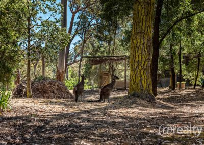 779 Chesterpass Road, Wilyung (82 of 116)